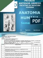 Anatomia Semana 01