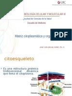 Clase BB3 Mitocondrias Lisosomas 2013-2