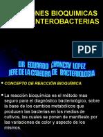 Reacciones Bioquimicas 2010 Ok