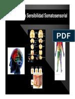Presentacion Practica receptores sensoriales.pdf