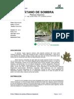 Ficha PLÁTANO de SOMBRA _Platanus Hispanica