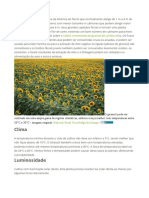 Plantar Girassol