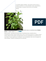Plantar Hortela