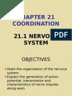 21.1 Nervous System