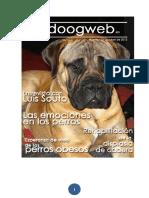 Doogweb_octubre2013