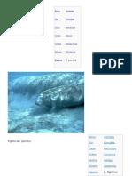 Clasificacion Taxonomican de Animales Del Pacifico