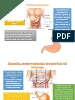 Aparato DigestivoPDF.pdf