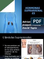 Exposicion de Hormonas Suprarrenales (David Tapia)