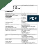 PRINCIPALES ORIFICIOS DE LA BASE DEL CRANEO ORIFICIO JJJJ.docx