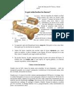 Guia de Estudio y Preguntas de Los Huesos y Músculos