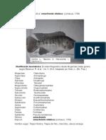 Trabajo Biologia y Taxonomia