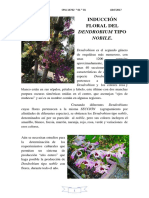 10 Induccion Floral Del Dendrobium Tipo Nóbile - Para Combinar - Para Combinar - Para Combinar