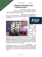 Las Orquídeas Inducidas Por Vernalizacion