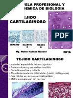 TEJIDO CARTILAGINOSO (2).pptx