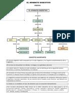 Aplica_ Sistema Digestivo2