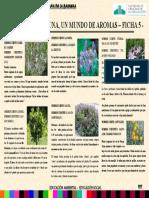 1.Plantas Aromáticas Delantera
