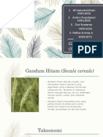 SECALE-GANDUM HITAM