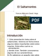 el-saltamontes-1213284016431039-8 (1)
