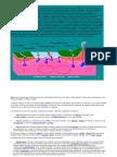 Mezclas de Silicatos Fundidos ( MAGMA)