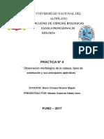 ENTOMOLOGIA INFORME 4