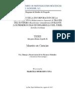 Estudio de La Incorporación de La Levadura Viva a Través Del Rotífero Durante Los Primeros Días de Dsesarrollo Del Jurel