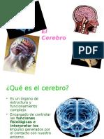 Ppt Cerebro