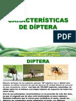 CARACTERISTICAS_DE_DIPTERA.pdf