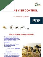 11. Moscas y dipteros.pdf
