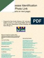 RICE DISEASE IDENTIFICATION.pdf