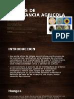 Hongos de Importancia Agricola Ppt