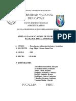 informe PIMENTAL