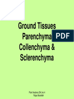 parenchyma,collenchyma and sclerenchyma.pdf