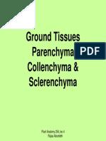 parenchyma,collenchyma and sclerenchyma.pdf