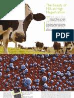 infocus Issue 18 June 2010 kalab - beauty of milk.pdf