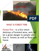 Forest Fire Roy