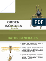 Orden Isóptera