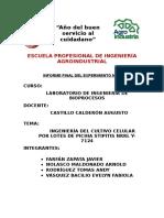 Informe Final Bioprocesos Grupo a1