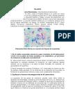 TALLER 8 Mycobacterium Tuberculosis