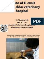 A Case of E. canis at Jibachha Veterinary hospital,Bharatpur-4,Chitwan, Nepal