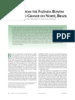 Emerald Brazil