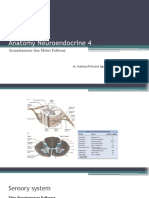 Anatomy Neuroendocrine 4
