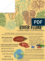anatomy liver fluke copy