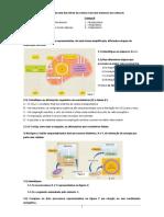 Ficha Biol 10º 2 Obtenção Energia