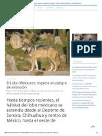 El Lobo Mexicano, Especie en Peligro de Extinción – Guía Turística de México _ Travel by México