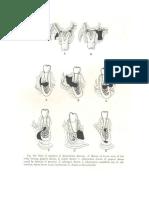 anatomi infeksi