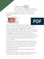 Definición de Piel (Descripción)