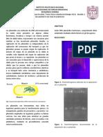 BQ Plasmidos Comp1
