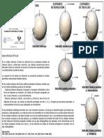 Indicatrices Opticas.pdf