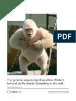 Gorila Alba