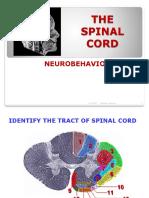 Week 4 Anatomy Prof Wah Spinal Cord